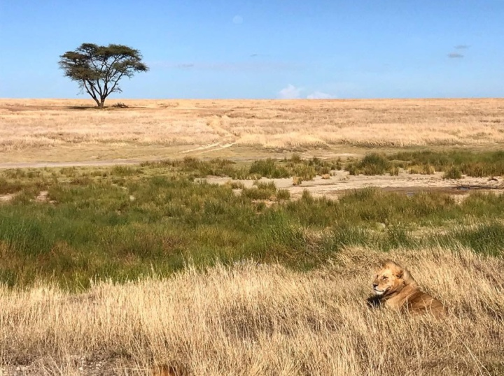 10 Essential Items For Your Safari PackingList