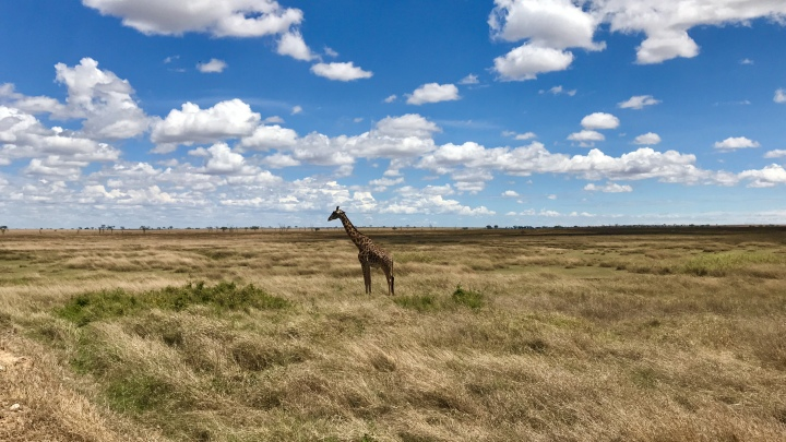 Review: 4 Day Tanzanian Safari, Serengeti, Ngorongoro Crater and Tarangire National Park